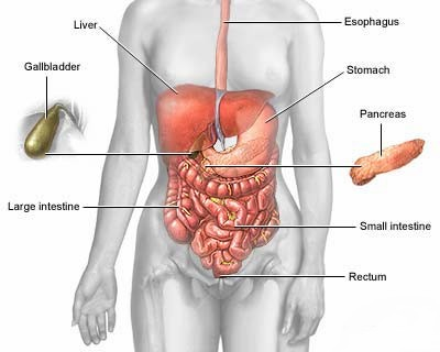 Digestive system diagram digestive diseases this second diagram of the digestive approach shows you all the many spots of the person overly can develop problems as a result of shoddy digestive health ccuart Choice Image