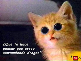gato+drogas.jpg