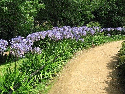 Un jard n azul el jardin y el cuidado de las plantas for Jardin azul canal 9