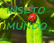 Inseto Mundo