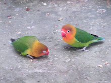 Love Birds at Melaka Butterfly Park