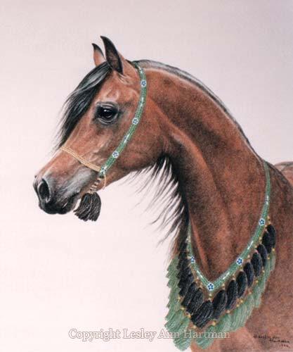 [Desert-Horse]