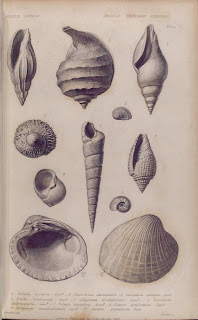 Steampunk Adventures - Fossil Shells sketch, 1832