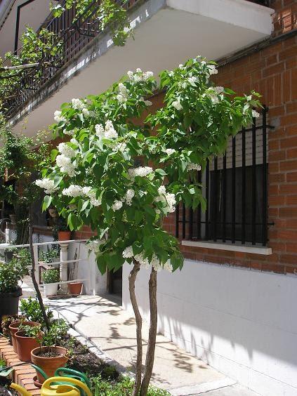 El jardin de pepa arboles de pepa for Jardin lilo