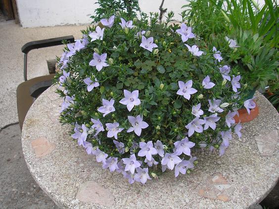 El jardin de pepa arbustos herbaceas anuales for Arbustos para exterior