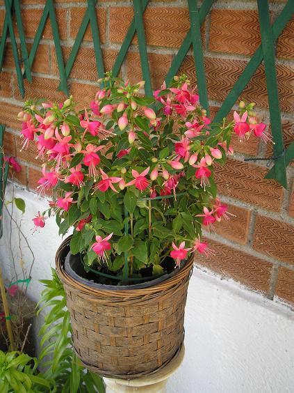 El jardin de pepa arbustos herbaceas anuales for Como se llaman las plantas ornamentales