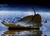 Folha seca ao vento