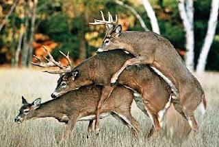 http://allaboutbodyart.blogspot.com/ deer-bizare-sex