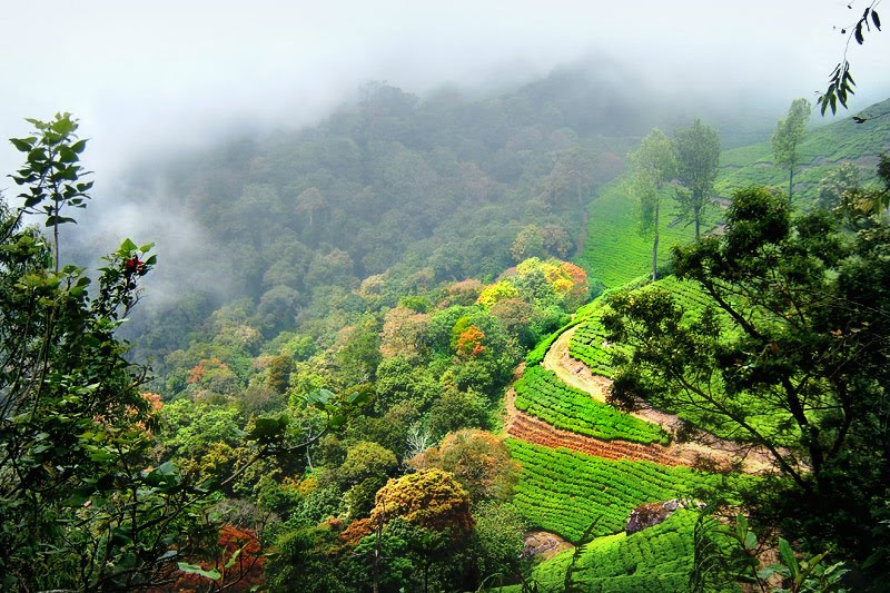 Munnar A Beautiful Scenery What When Why How