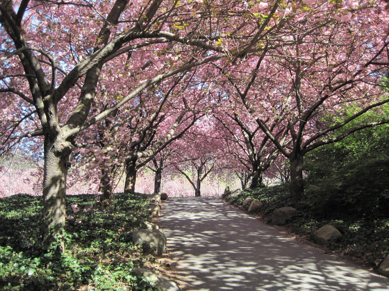 Greenbeat Brooklyn Scenes Of Spring At The Brooklyn Botanic Garden