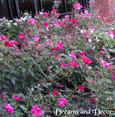 Knockout Roses: