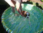 Roxy Swimming