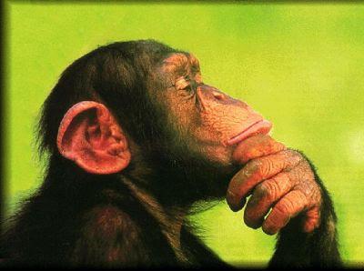 Si dovrebbe poter dibattere di tutto - Pagina 4 Scimmia