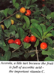 Barbados Cherry (16x Vit C of Oranges)