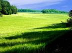 Padang Rumput Hijau