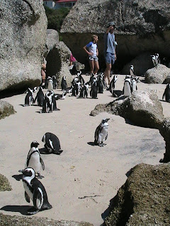 Happy Feet in South Africa