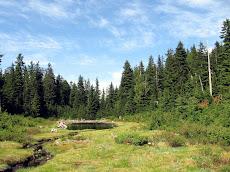 Munro Lake scene
