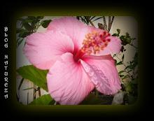 Do meu jardim 5