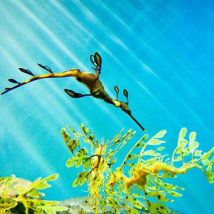 beautiful fishes in sea. Very eautiful seahorse