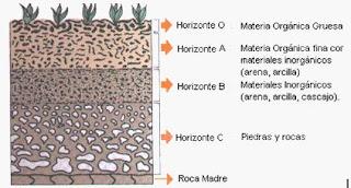 Suelo fases en la composici n del suelo for Como estan formados los suelos