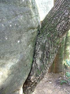 la bise d'un arbre à un rocher