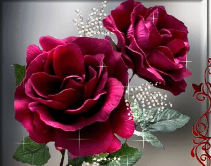 Las rosas margarita - Fotos flores bellas ...