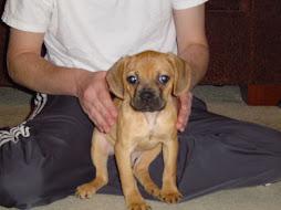 Romo Puppy