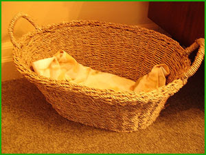 Sam's new catnip-scented basket.