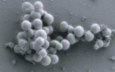 Synthia: o primeiro ser vivo criado em laboratório
