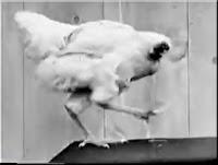 Mike, a galinha sem cabeça