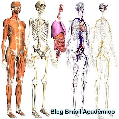 Body Browser permite ver o sistema circulatório, sistema nervoso, etc