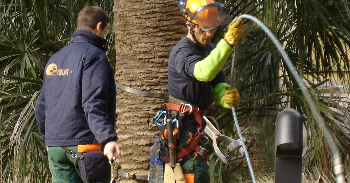 Poda de arboles y palmeras en valencia el convenio de for Convenio jardineria 2016