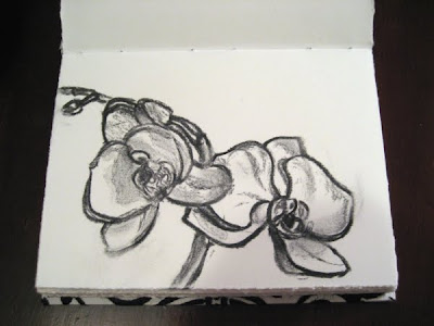 Orchid Charcoal Sketch