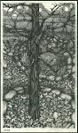 My Oak Tree