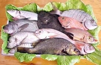 perder peso rapidamente,albondigas de pescado,Pescado,Albondigas