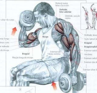 Dicas de exercícios para bíceps
