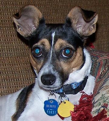 henry dog