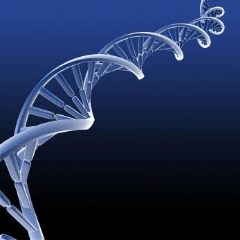 Dna Molecule Structure. DNA MOLECULE STRUCTURE LABELED
