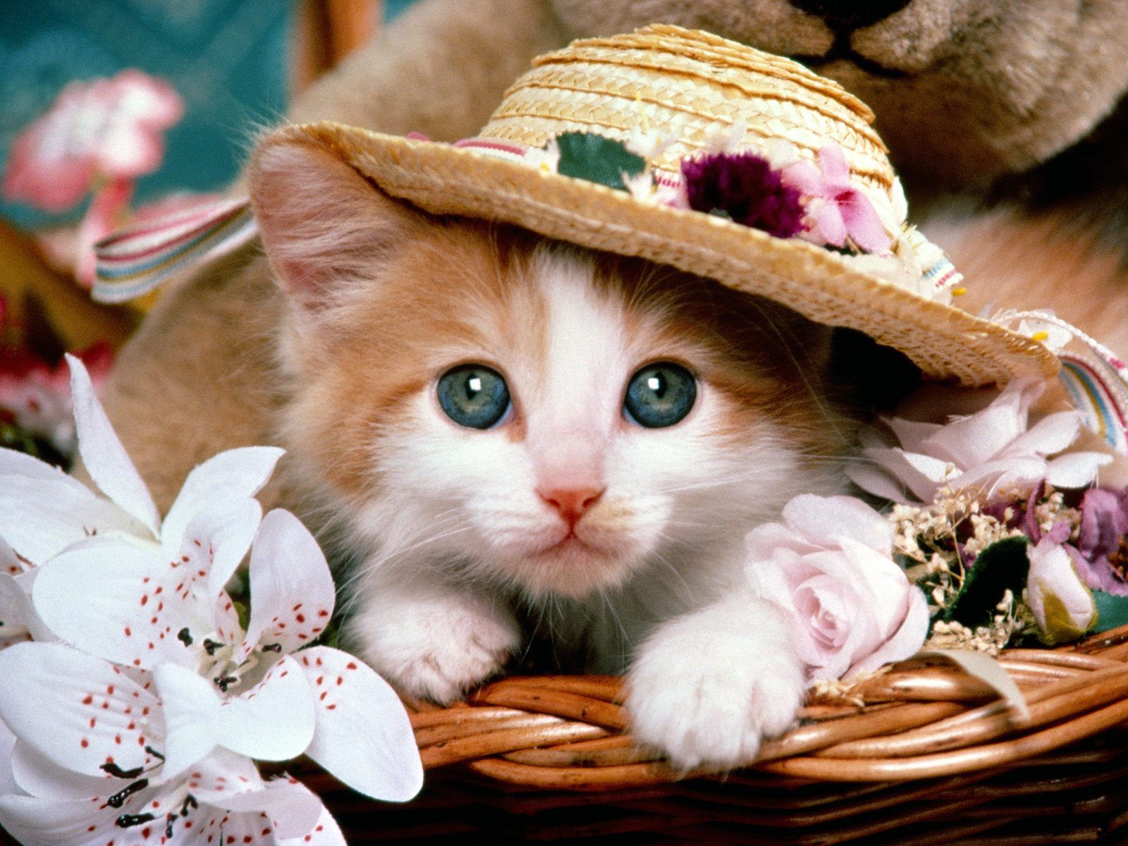 Cute cats wallpaper search results from Google