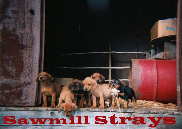 The Sawmill Strays