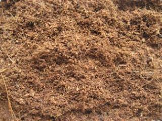 Fibra de Côco - Usada como substrato para o cultivo de enquitréias usadas na alimentação de peixes betta de linhagem (benny bettas)