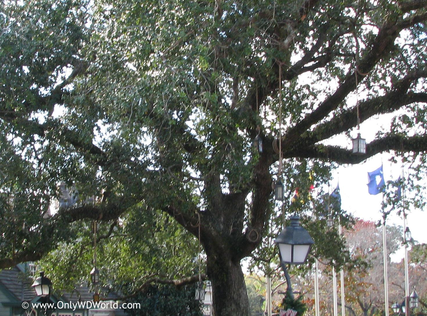 elm tree symbolism elm tree symbolism 100 elm tree