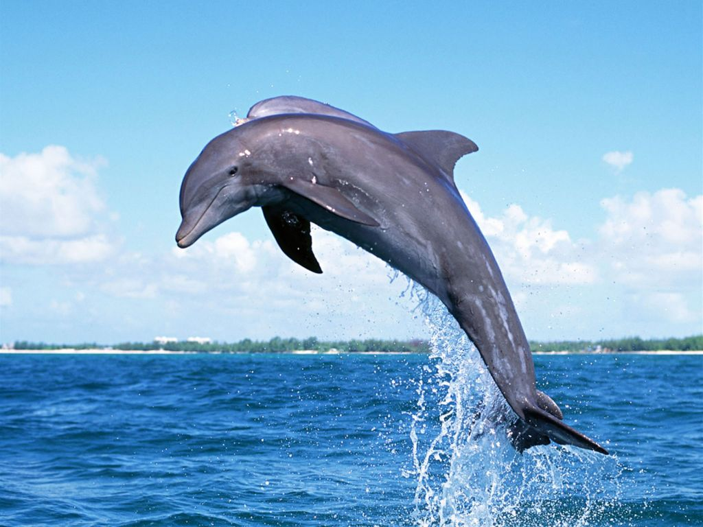 hintergrundbilder delfine - Hintergrundbilder Delfine vector Stock Vektor Colourbox