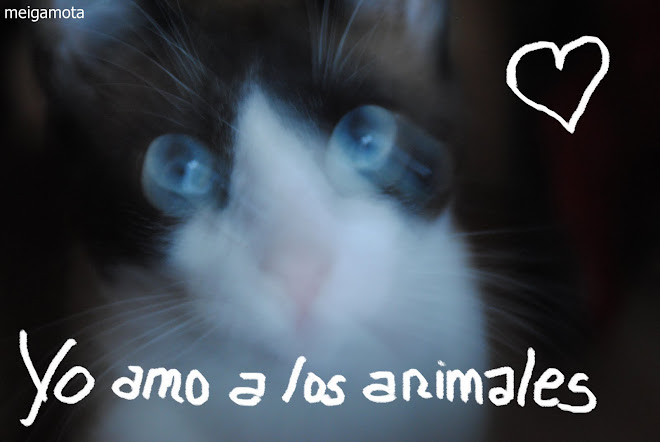 AMO A LOS ANIMALES PARA PODER AMAR A LOS RACIONALES