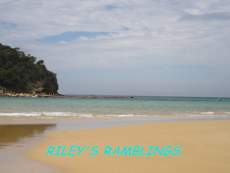 Riley&#39;s Ramblings