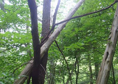 Mungo Says Bah! Hiking, Camping, Bushcraft, Nature