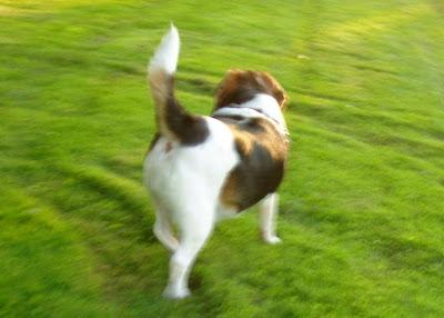 Mungo says bah, woodcraft, bushcraft, beagles, flora, edible, fungus