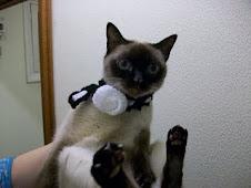 Una gata con mucho glamour!!! luce un foular hecho por mí!!!