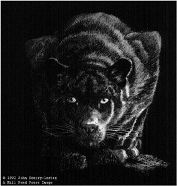 black panthers prints