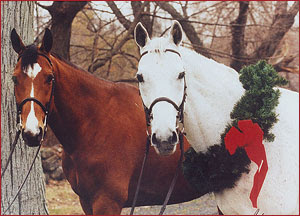 Author Mary Paine's beautiful horses, Topper and Spencer
